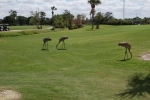 golf 03042017 (222)